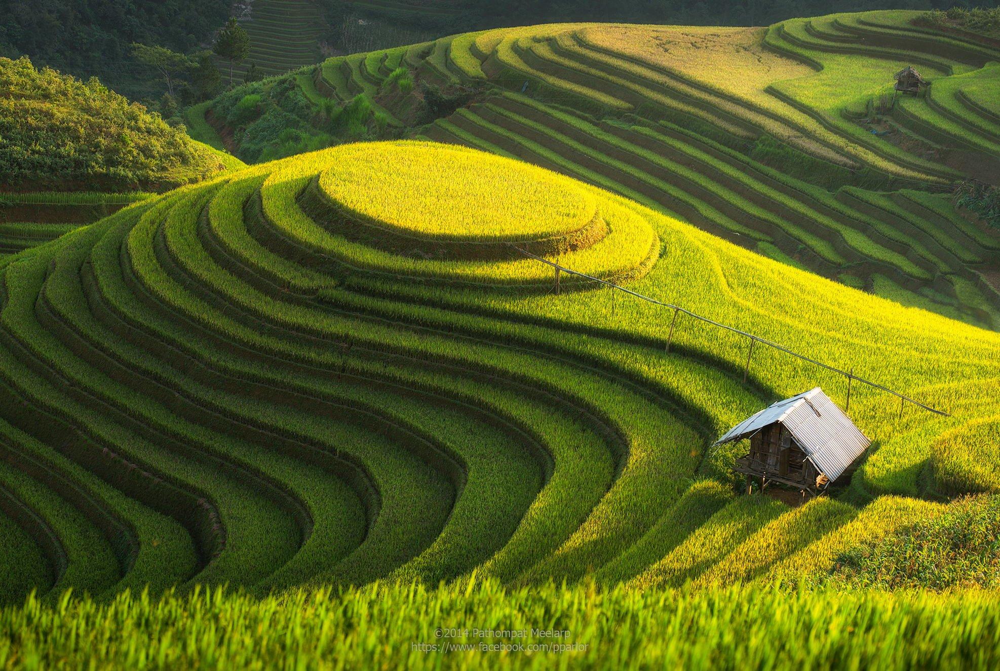Un riz sud-américain & Japonais